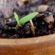Tomato Plant Sprout | ContraryCook.com